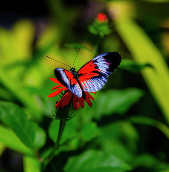 Photograph - Beautiful Butterfly by Kevin Banker