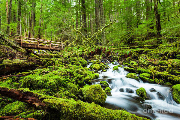 Wall Art - Photograph - Beautiful Cascade Waterfall In Sol Duc by Kan khampanya