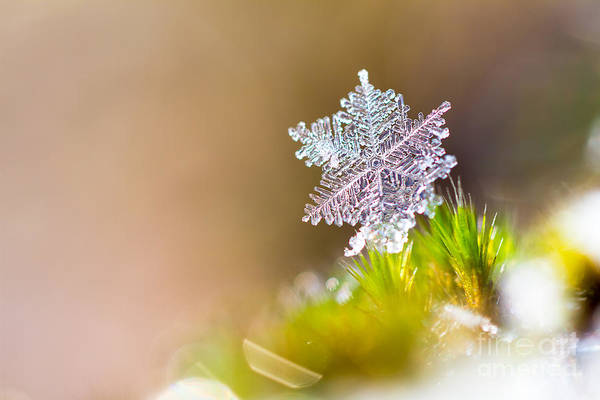 Wall Art - Photograph - Beautiful Close Up Image Of A Snowflake by Dennis Van De Water