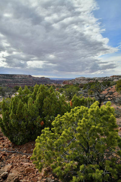 Photograph - Beautiful Clouds Over Canyonlands Np by Ray Mathis