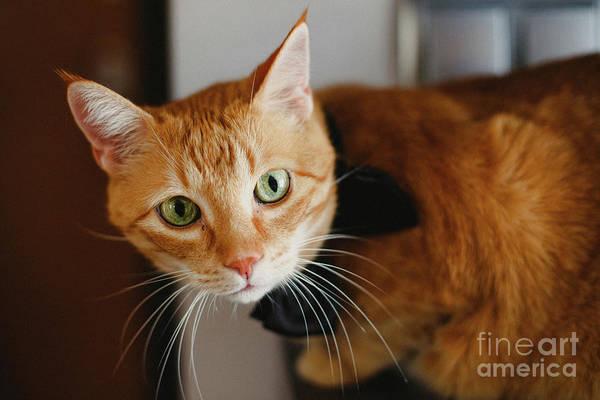 Photograph - Beautiful Face Orange Cat  Looking At Camera. by Joaquin Corbalan