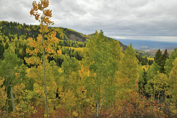 Photograph - Beautiful Fall Color Along Owl Creek Pass Road by Ray Mathis