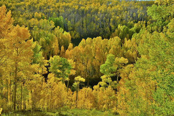 Photograph - Beautiful Fall Colors At Woods Lake State Wildlife Area by Ray Mathis