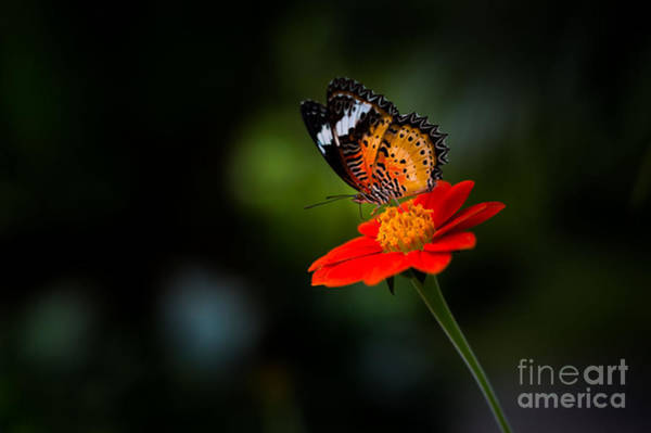 Wall Art - Photograph - Beautiful Flower And Butterfly by Mr Burger Hut