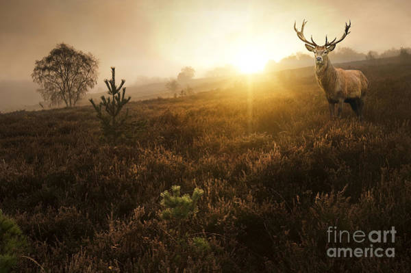 Atmosphere Wall Art - Photograph - Beautiful Forest Landscape Of Foggy by Matt Gibson