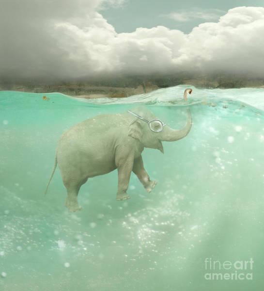 Wall Art - Photograph - Beautiful Funny Elephant Swimmer by Valentina Photos