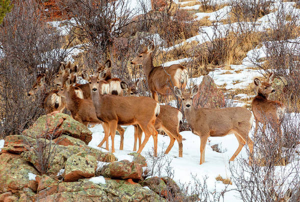 Photograph - Beautiful Herd Of Deer On Mountainside by Steve Krull