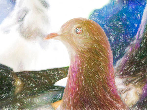 Photograph - Beautiful Homing Pigeon Colored Pencil by Don Northup