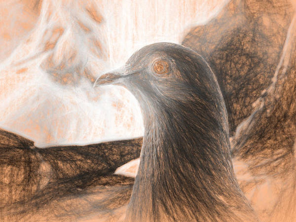 Photograph - Beautiful Homing Pigeon Da Vinci by Don Northup