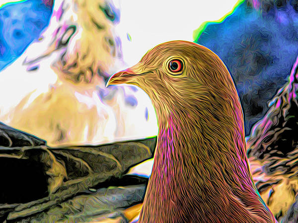 Photograph - Beautiful Homing Pigeon Expressionist by Don Northup