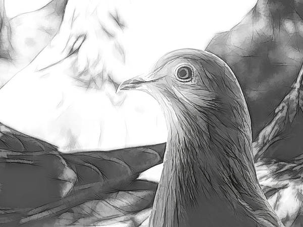 Photograph - Beautiful Homing Pigeon Sketch by Don Northup