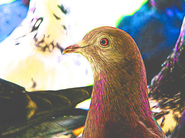 Digital Art - Beautiful Homing Pigeon Styled by Don Northup