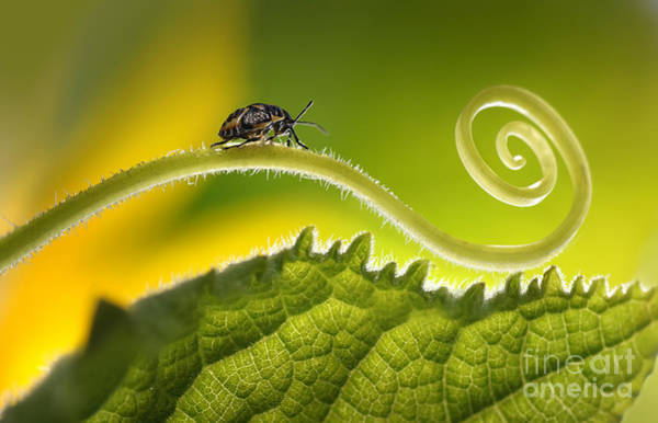 Magic Wall Art - Photograph - Beautiful Insects On A Leaf Close-up by Ledyx