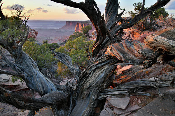 Photograph - Beautiful Juniper At Sunset In Canyonlands by Ray Mathis
