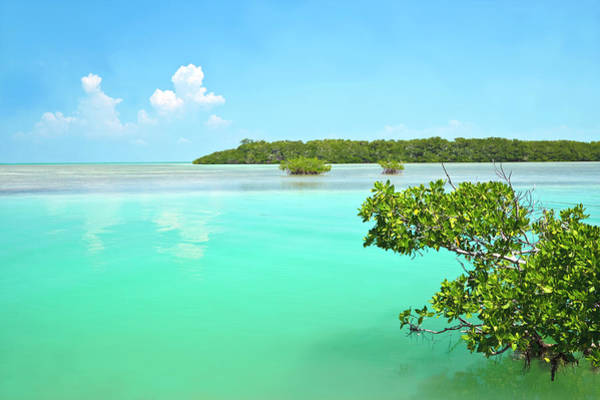 Branch Photograph - Beautiful Lagoon by Ideeone