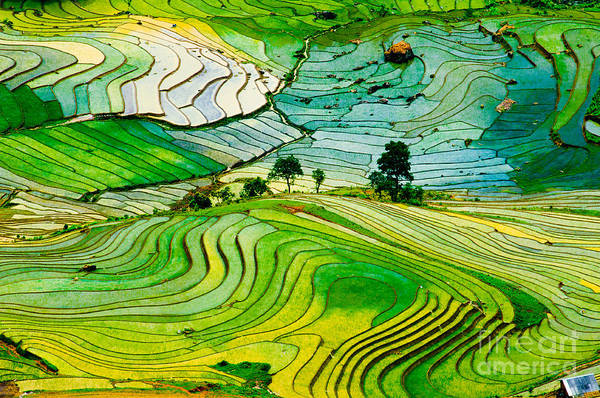 Myanmar Wall Art - Photograph - Beautiful Landscape About Terraced Rice by Jimmy Tran