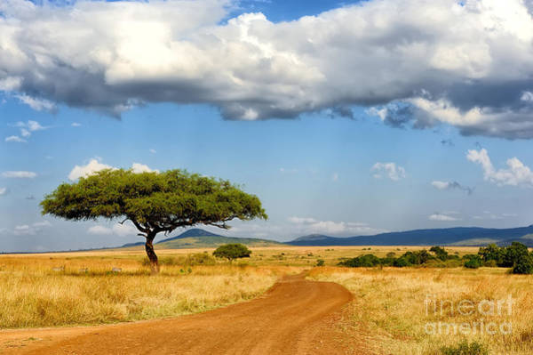 Reserve Wall Art - Photograph - Beautiful Landscape With Tree In Africa by Volodymyr Burdiak