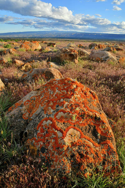 Photograph - Beautiful Lichens In Book Cliffs Desert by Ray Mathis