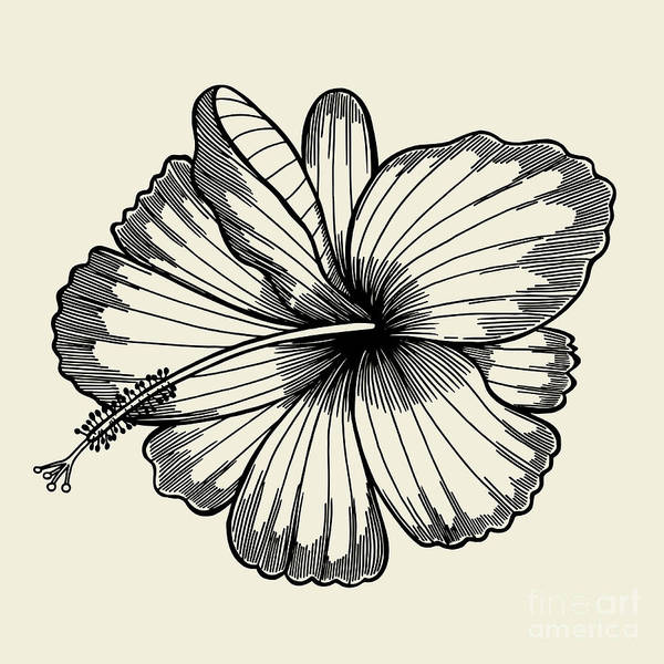 Engraved Digital Art - Beautiful Lily Painted In A Graphic by Frescomovie