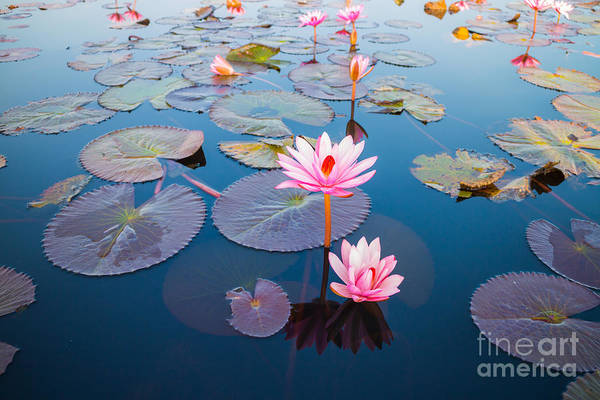 Pink Lotus Flower Photograph - Beautiful Lotus Flower Outdoor by Kridsada Tipchot