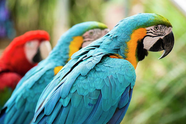 Photograph - Beautiful Macaw Birds by Rob D Imagery