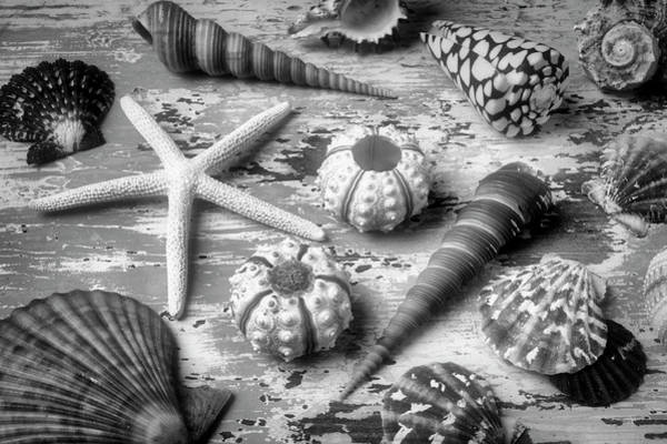 Wall Art - Photograph - Beautiful Marne Seashell Collection In Black And White by Garry Gay