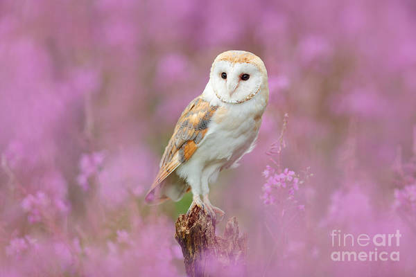 Wall Art - Photograph - Beautiful Nature Scene With Owl And by Ondrej Prosicky
