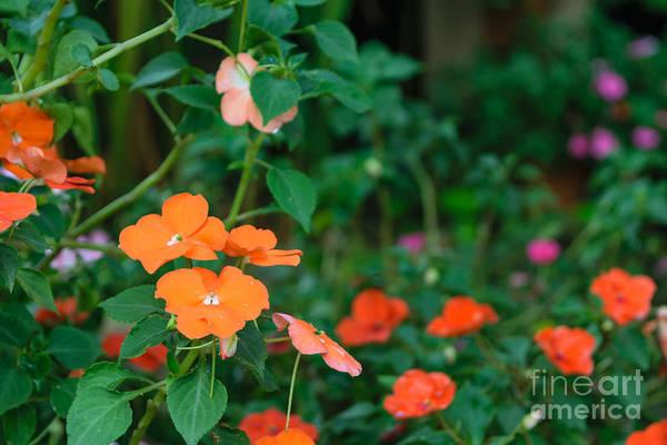 Florist Wall Art - Photograph - Beautiful Orange Flower, Naturally by Pongmoji
