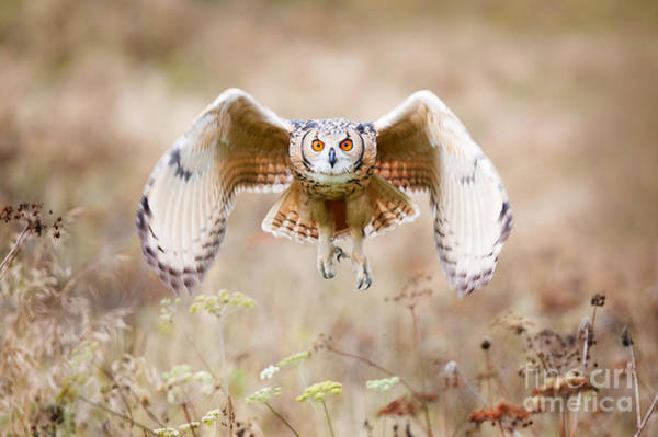 Alert Wall Art - Photograph - Beautiful Owl Photographed While by Jaroslaw Saternus