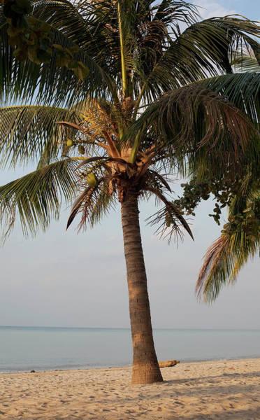 Beautiful Palm Tree On The Beach Art Print