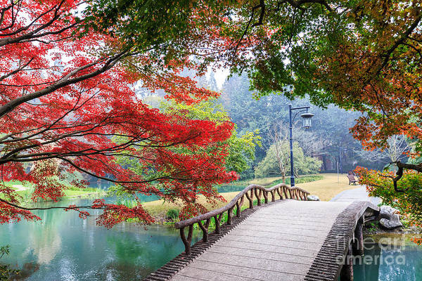 Wall Art - Photograph - Beautiful Park In Autumn by Zhao Jiankang