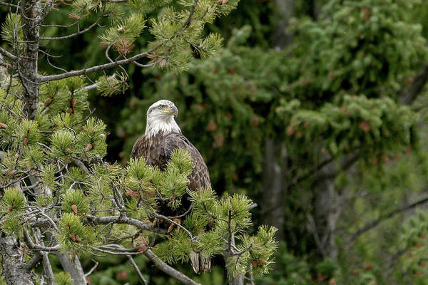 Photograph - Beautiful Perch by Ronnie and Frances Howard