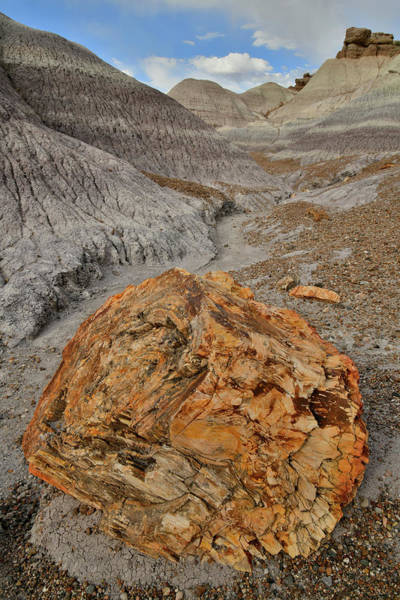 Photograph - Beautiful Petrified Wood In Blue Mesa by Ray Mathis