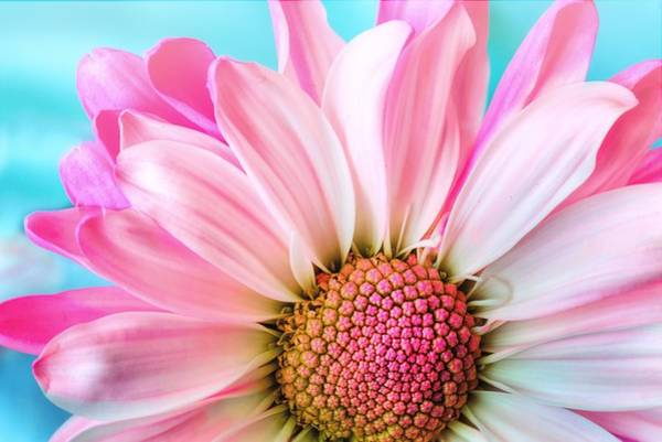 Photograph - Beautiful Pink Flower by Top Wallpapers