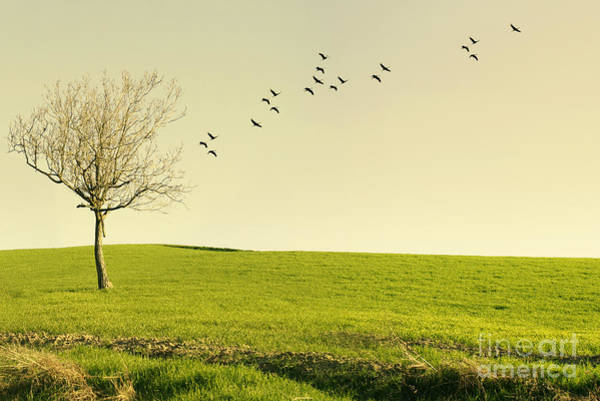 Poetic Photograph - Beautiful Poetic Landscape With A Tree by Valentina Photos