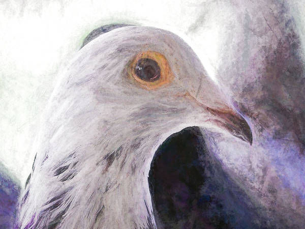Photograph - Beautiful Racing Pigeon Chalky by Don Northup