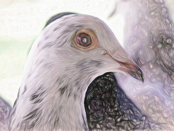 Photograph - Beautiful Racing Pigeon Liquid by Don Northup