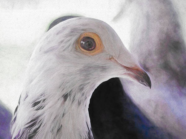 Photograph - Beautiful Racing Pigeon Painted by Don Northup