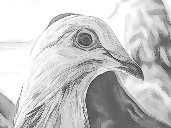 Photograph - Beautiful Racing Pigeon Sketch by Don Northup