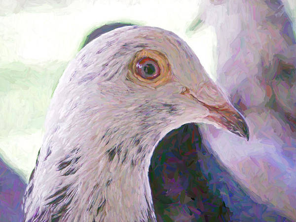 Photograph - Beautiful Racing Pigeon Van Gogh by Don Northup