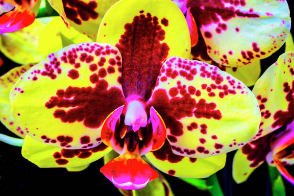 Wall Art - Photograph - Beautiful Red And Yellow Orchid by Garry Gay