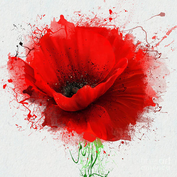 Wall Art - Digital Art - Beautiful Red Poppy, Closeup On A White by Pacrovka