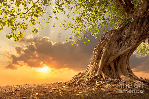 Beautiful Sunrise Photograph - Beautiful Scence Of Big Tree With by Twstock