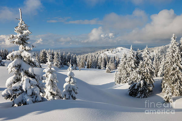 Wall Art - Photograph - Beautiful Snowy Landscape .firs In A by Godin Stephane