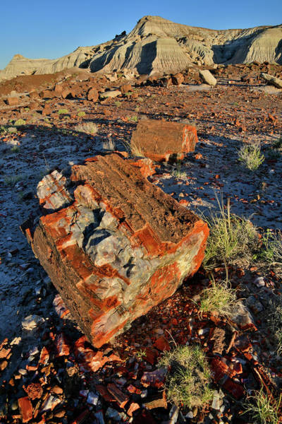 Photograph - Beautiful Specimens Of Petrified Wood In Jasper Forest by Ray Mathis