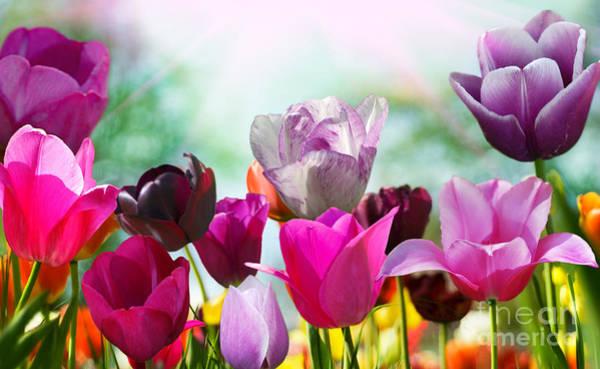 Florist Wall Art - Photograph - Beautiful Spring Flowers by Monika Gniot