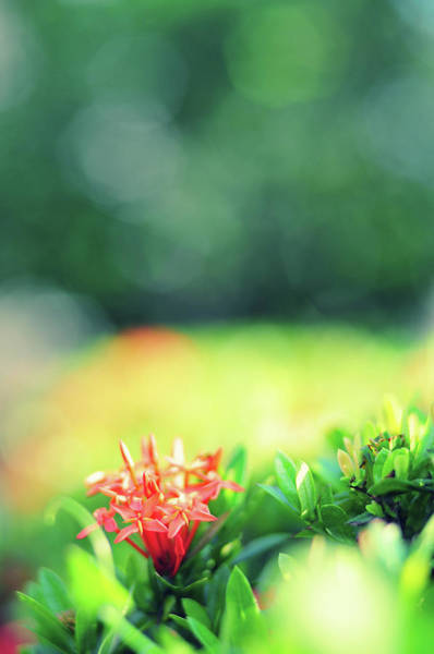 Vertical Garden Photograph - Beautiful Spring Flowers by Primeimages