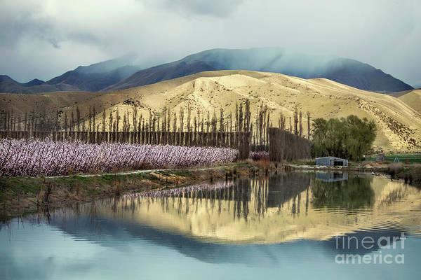 Blooming Tree Wall Art - Photograph - Beautiful Stillness by Evelina Kremsdorf