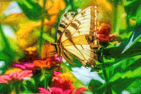 Beautiful Swallow Tail Butterfly Art Print