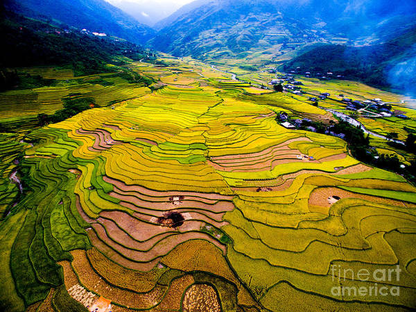 Beautiful Terraced Rice Field In Art Print